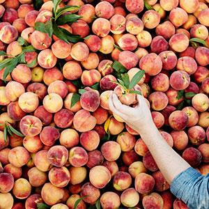 Peach Truck at Gervasi
