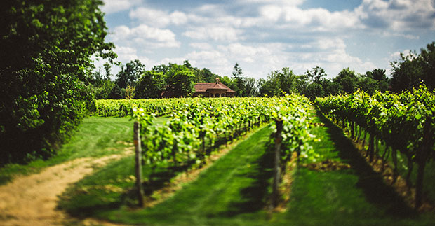 Take a self-guided Italian wine tour at Gervasi Vineyard